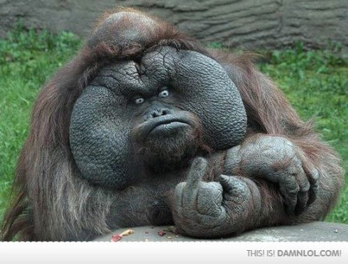 Pissed Off Gorilla