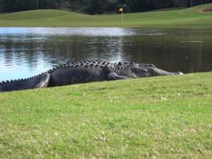 FL-Golfcourse