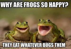 HappyFrogs
