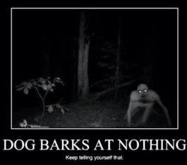 DogBarksAtNothing